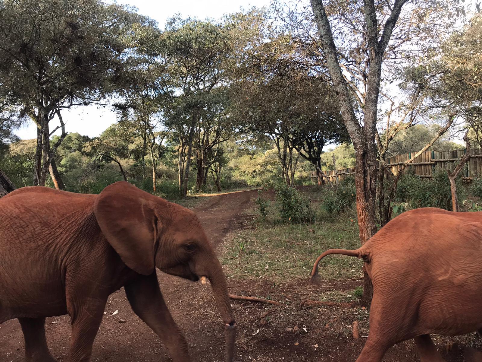 Baby-Elefanten aus dem Elefanten-Waisenhaus