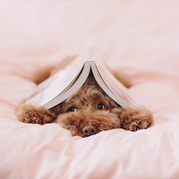Mein Leben als Hund – Teil 1