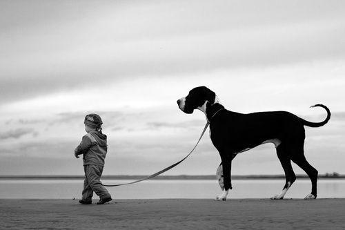 Mein-Leben-als-Hund