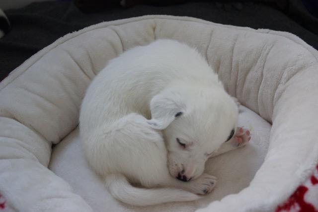 Mein Leben als Hund - Teil 4