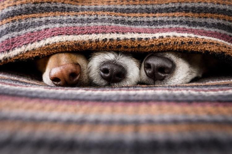 Mein Leben als Hund - Teil 2